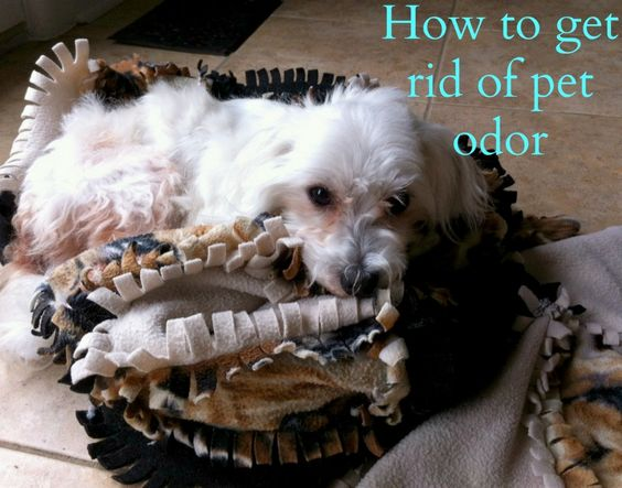 6 Effective Steps to Get Rid of Pet Odor