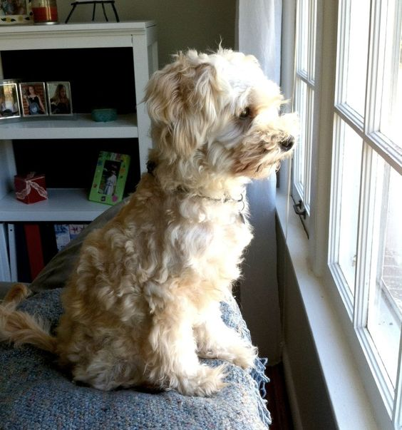 My Dog's Day – A Day in the Life of Teddy!