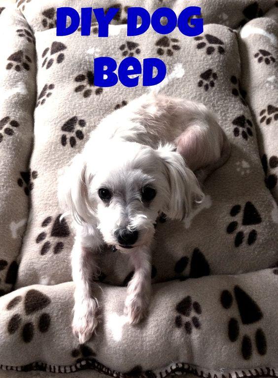 DIY Dog Bed & Meet Billy
