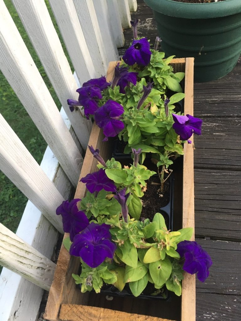 plants for the deck